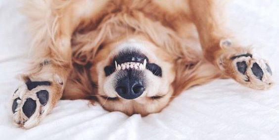 Raw 4 Paws Healthy Teeth